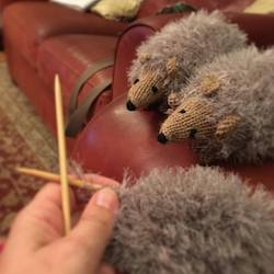 click to see hedgehogs in production image